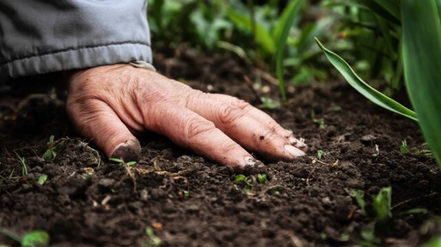 Eine weibliche alte Hand liegt auf fruchtbarem Boden