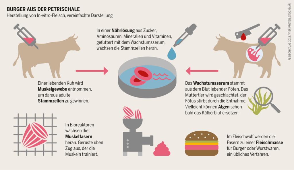 Burger aus der Petrischale. Infografik Herstellung von In-vitro-Fleisch