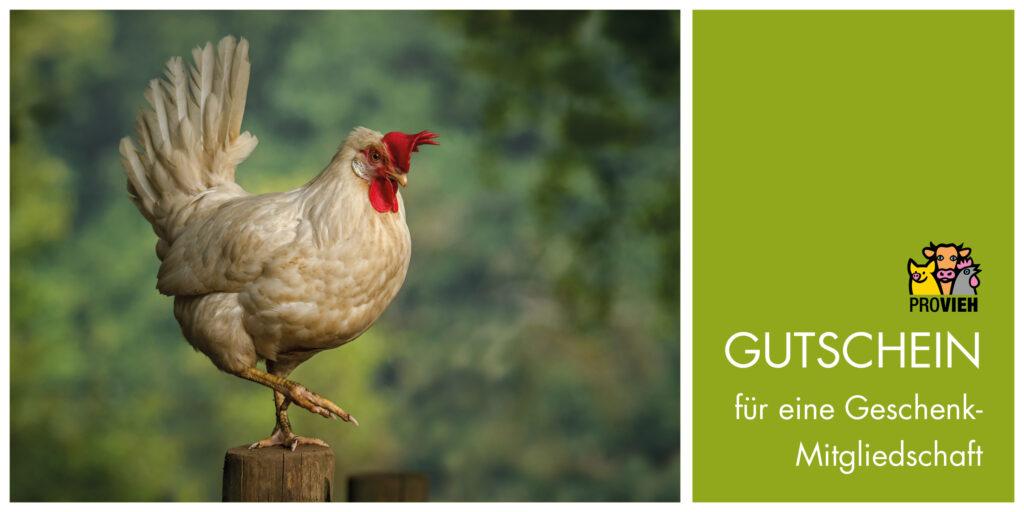 """Vorderseite der grünen Gutscheinkarte mit einem Huhn-Motiv links und rechts dem Text """"Gutschein für eine Geschenk-Mitgliedschaft"""""""