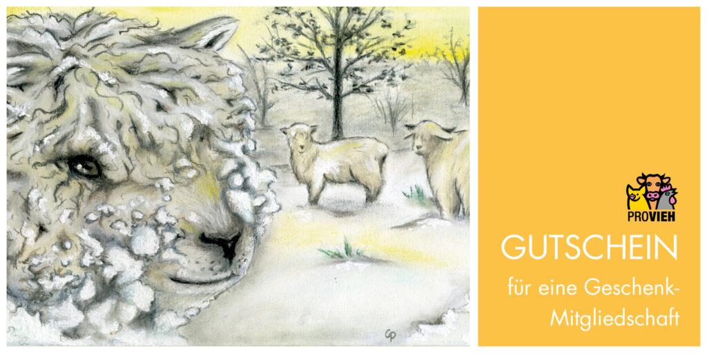 Gelbe Gutscheinkarte mit Winterschafe-Motiv für eine Geschenk-Mitgliedschaft