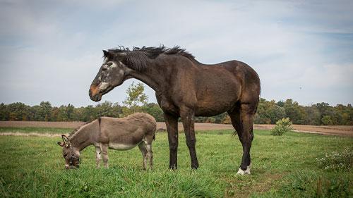 Ein Pferd und ein Esel auf einer Weide