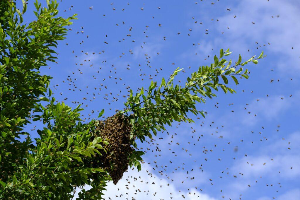 Wildbienen an einem Ast