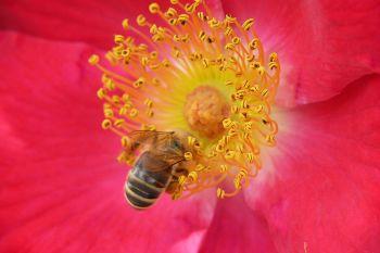 Eine Biene in einer Blume