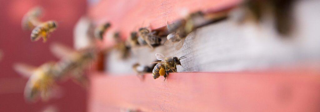 Eine Biene am Flugloch