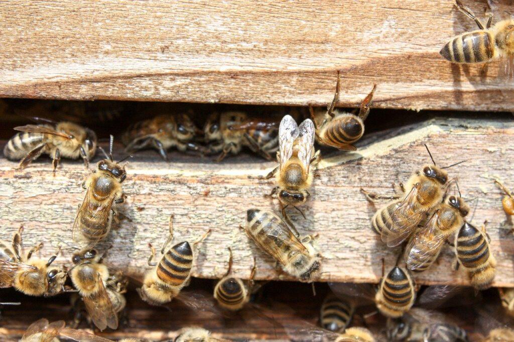 Ein Bienenstock aus Holz