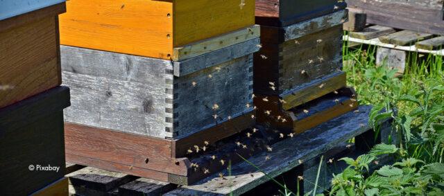 Ein stark besuchter Bienenstock