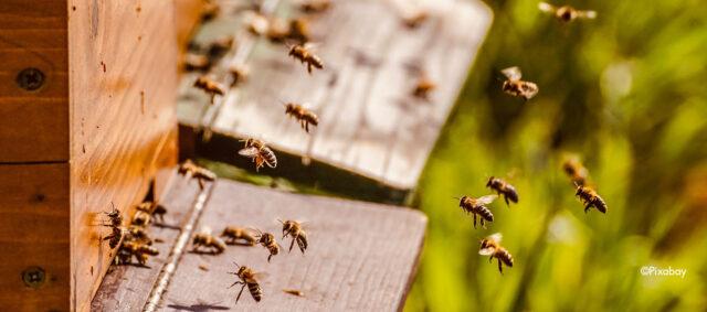 Ein angeflogener Bienenstock
