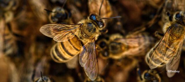 Viele Bienen auf einem Haufen