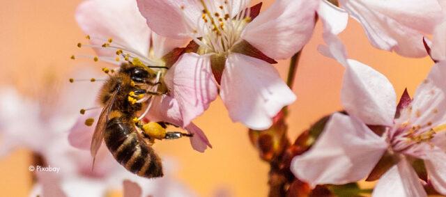 Eine Biene bestäubt eine Blume