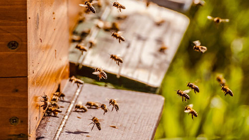 Ein Bienenstock