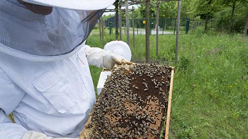 Ein Imker und seine Bienen