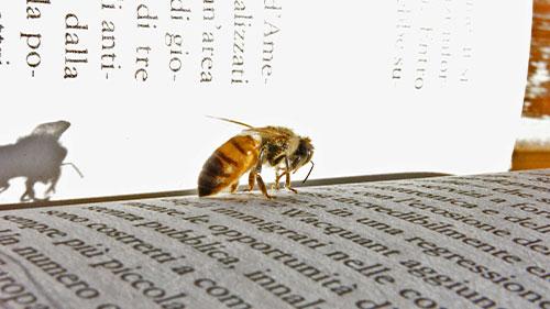 Eine Biene auf den Seiten eines Buches