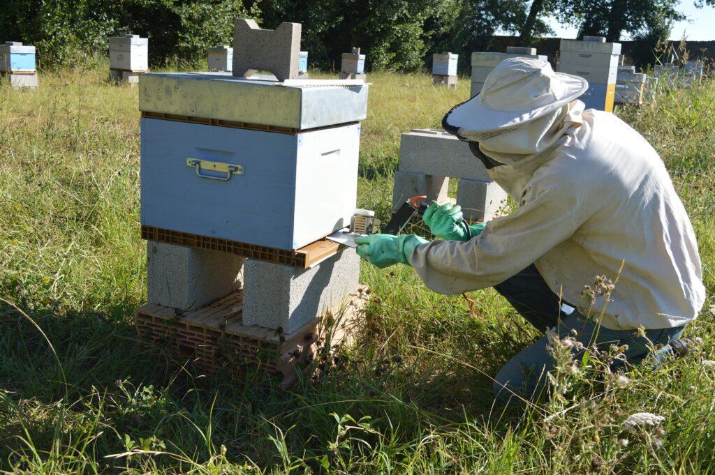 Die Bekämpfung der Verroa Milbe