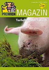 Cover, ein kleines Schwein wühlt in der Erde