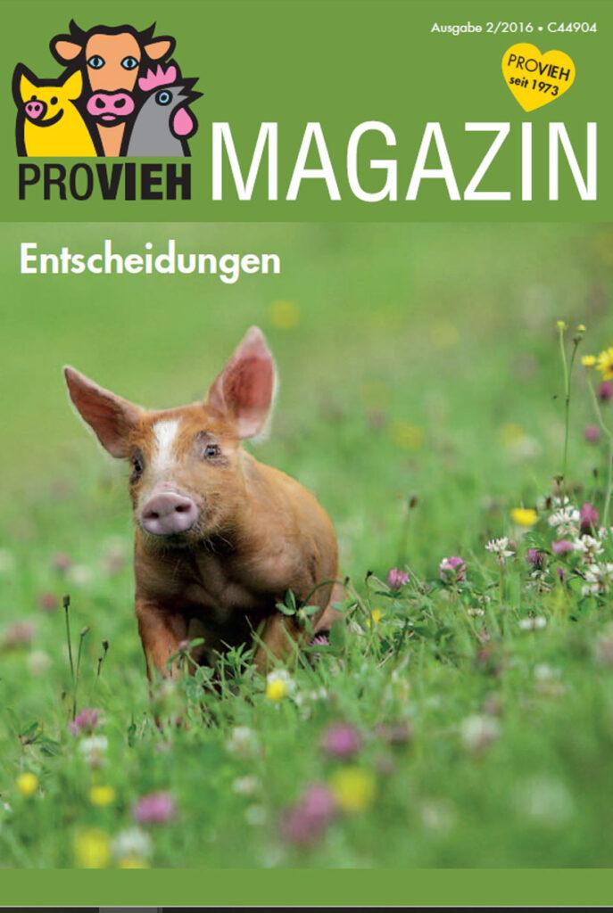 Cover, ein kleines Schwein auf einer Wiese