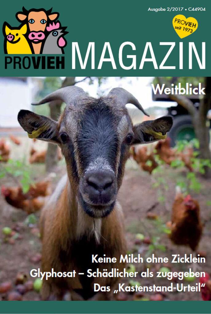 Cover, eine neugierige Ziege