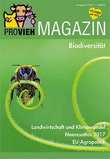 Cover, eine Biene auf einem Halm