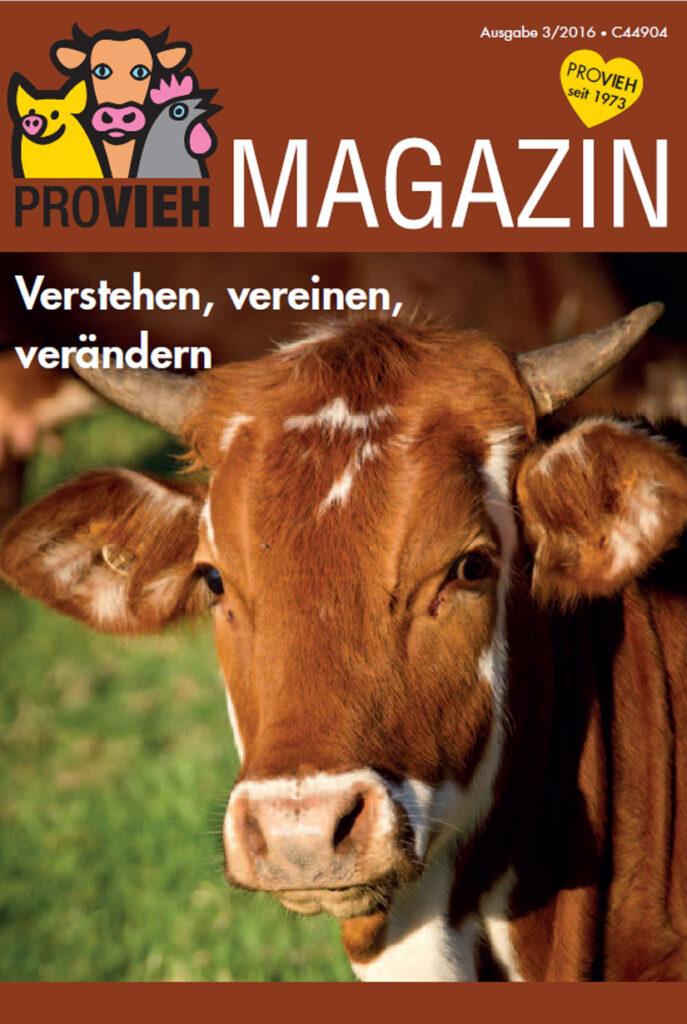 Cover, Portrait einer Kuh im Sonnenlicht