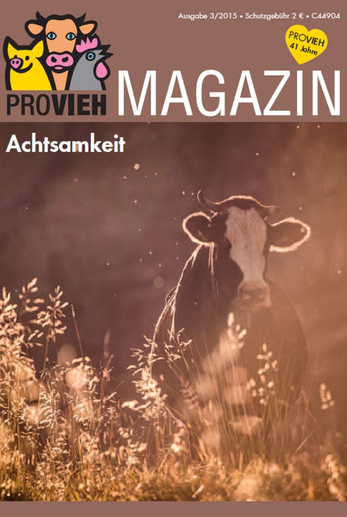 Cover, eine Kuh im Abendlicht