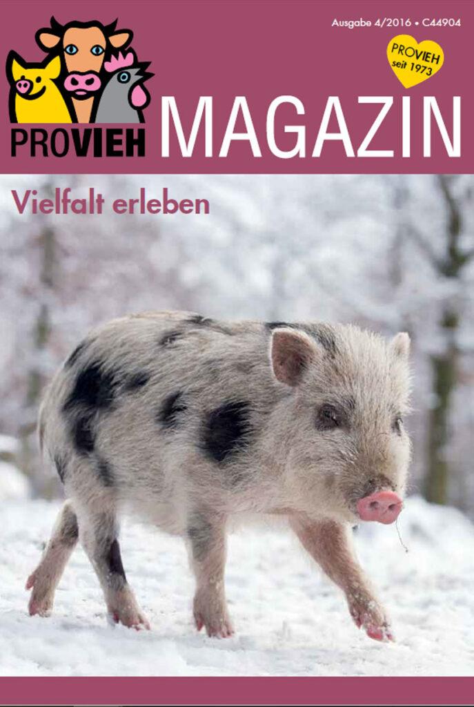 Cover, ein kleines Schwein in winterlicher Landschaft