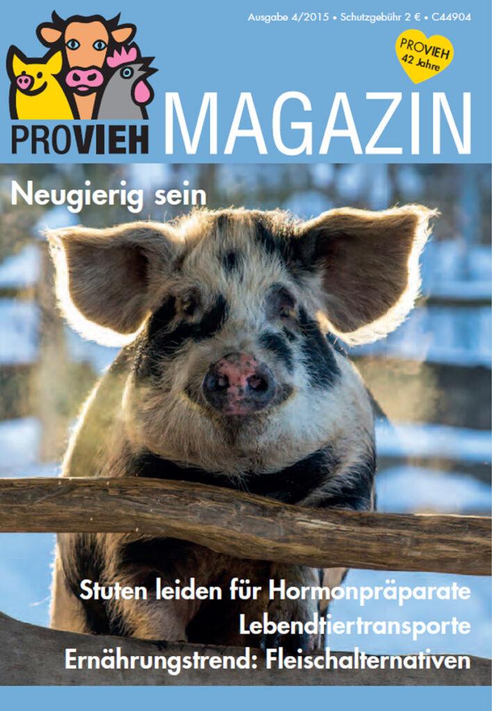 Cover, ein Schwein schaut
