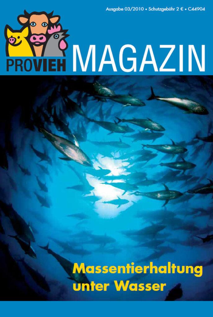 Cover, ein Fischschwarm unter Wasser