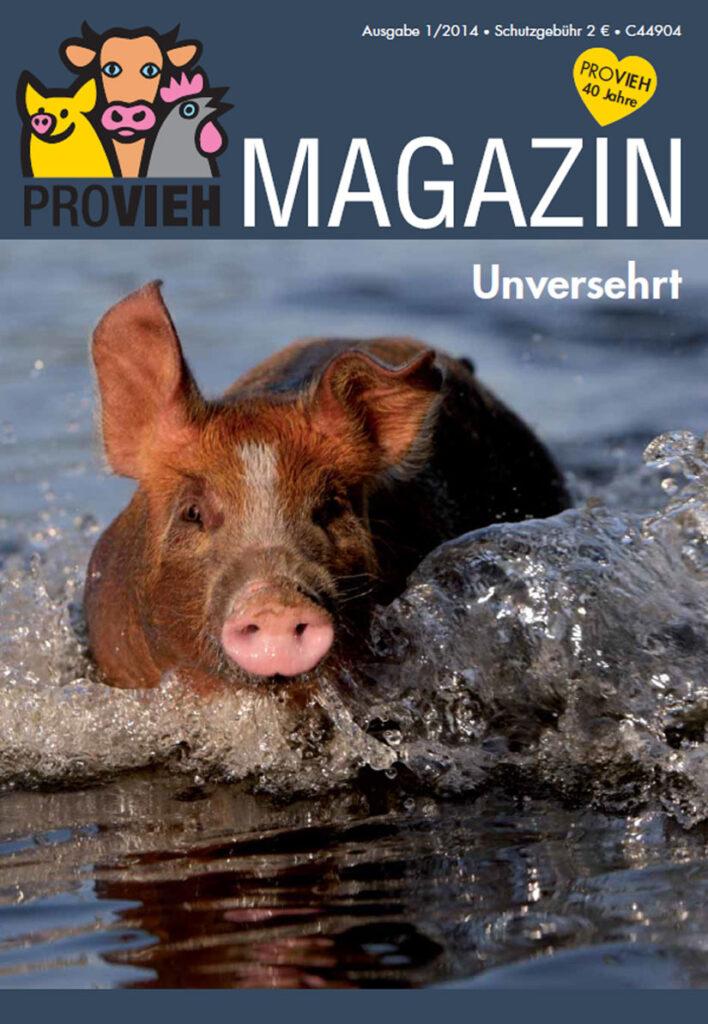 Cover, ein badendes Schwein