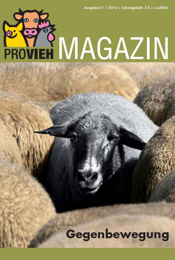 Cover, ein graues Schaf in einer Herde