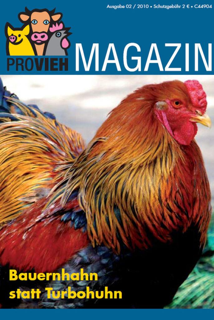 Cover, ein bunter Hahn im Portrait