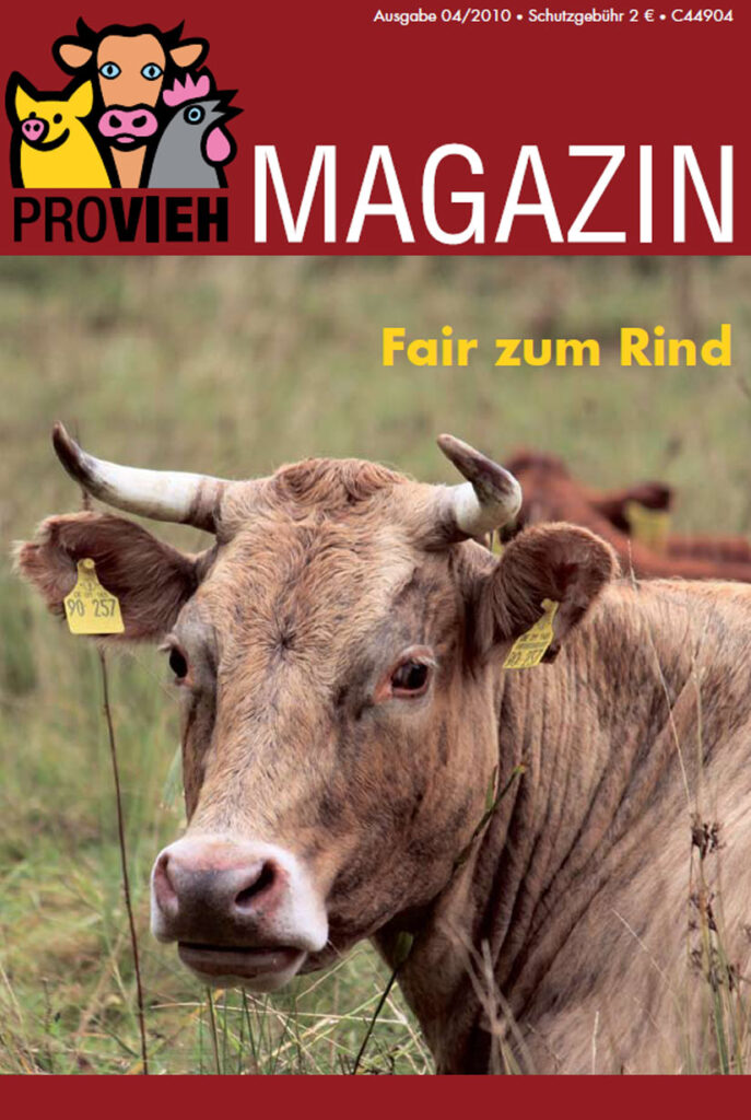 Cover, eine Kuh mit Hörnern im Portrait