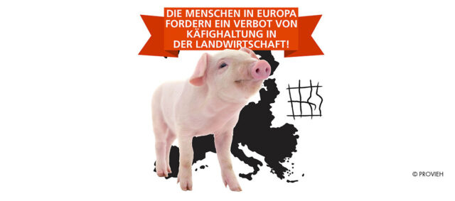 Ein Ferkel vor einer Europakarte