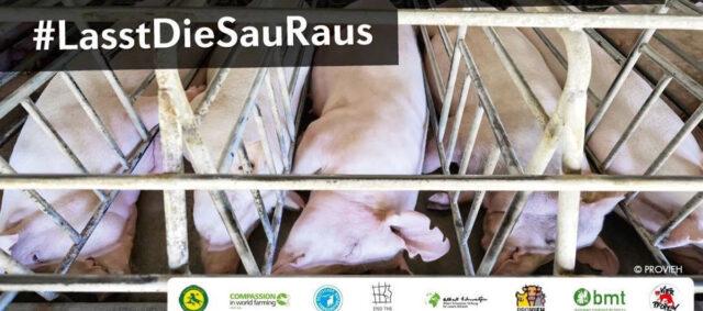 Plakat zu Kampange LassDieSauRaus