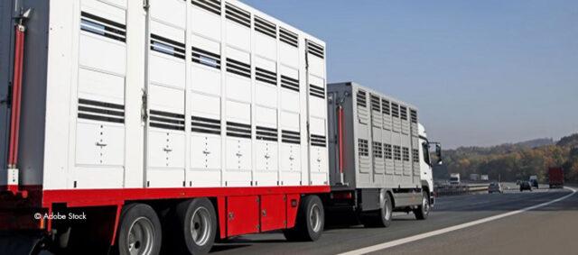 Ein Tiertransporter auf der Straße