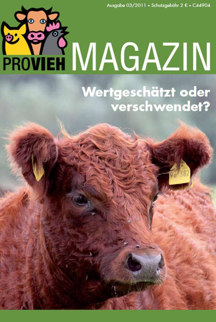Cover, eine Kuh im Portrait