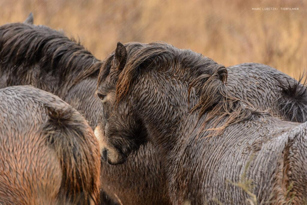 Eine Gruppe nasser Pferde
