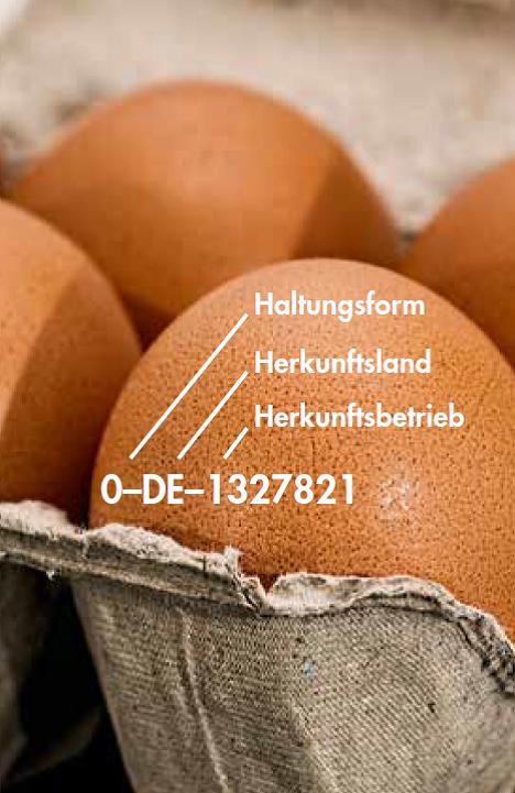 Eier mit einer Erklärung der Haltungskennzeichnung in einem Eierkarton