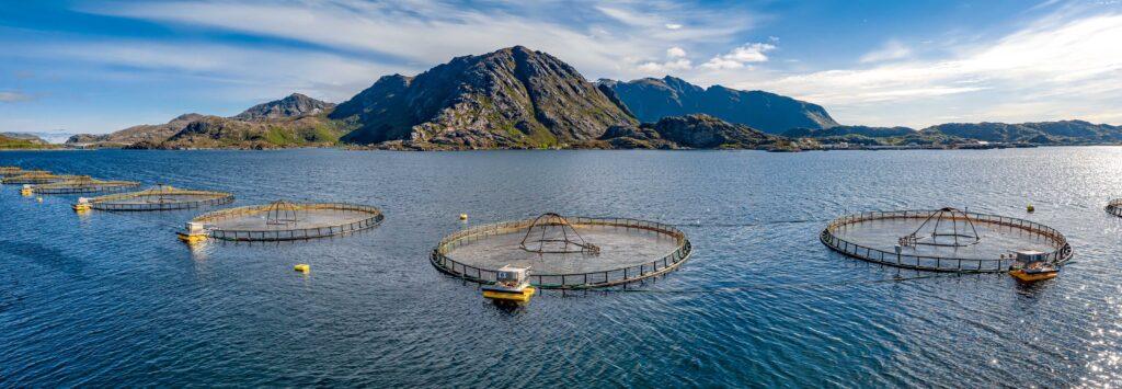 Lachs Farm Norwegen