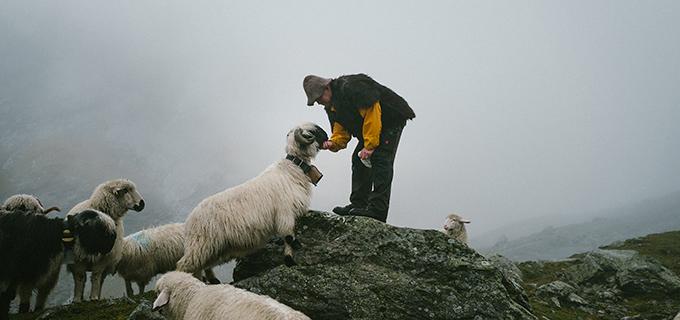 Ein Schäfer und sein Schaf