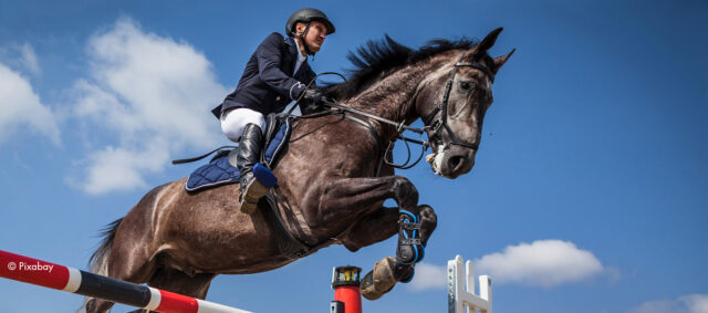 Springreiten: Pferd springt über eine Hürde.