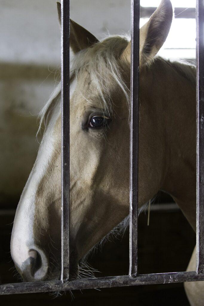 Ein Pferd in einer Box hinter Gittern