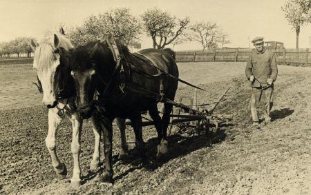 Ein altes Foto von einem Pferdegespann