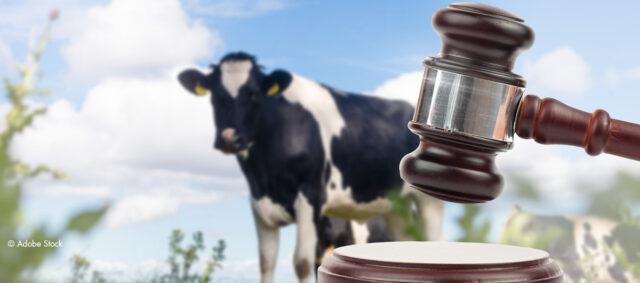 Kuh und Rechtshammer
