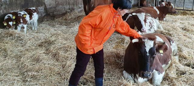 Eine Frau streichelt eine Kuh