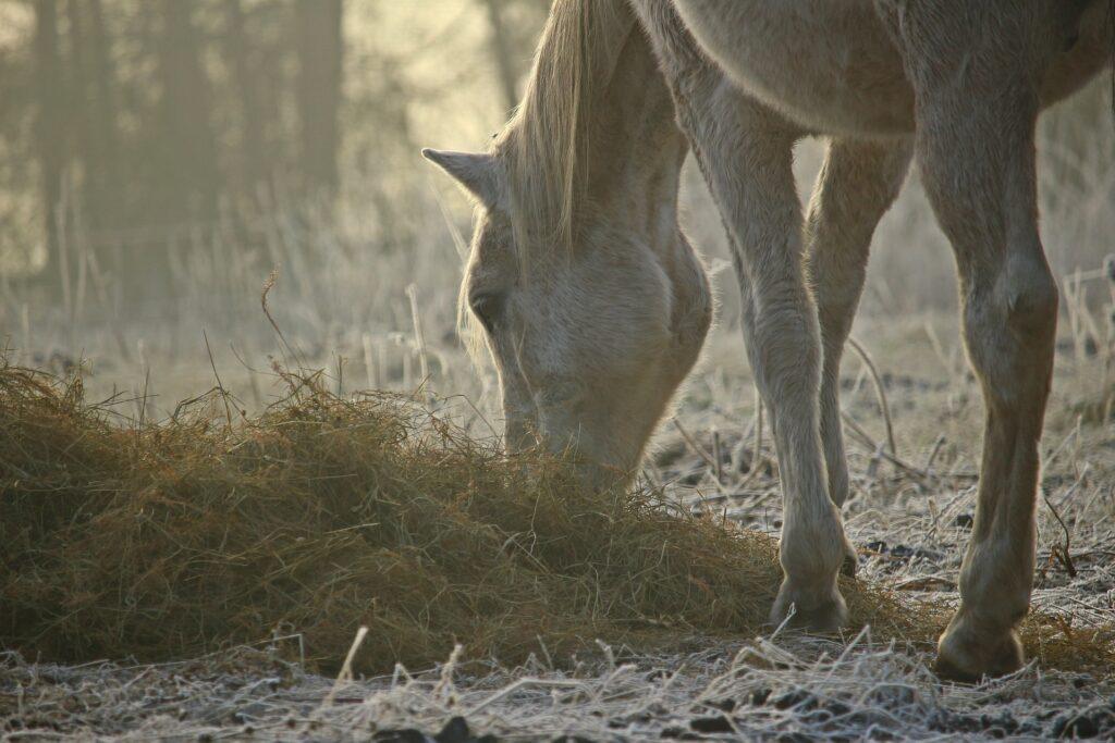 Ein Pferd frisst Heu