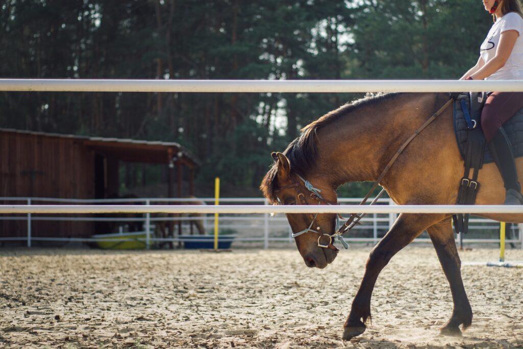 Ein Pferd auf einem Reitplatz