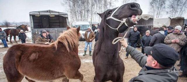 Der Pferdemarkt in Polen