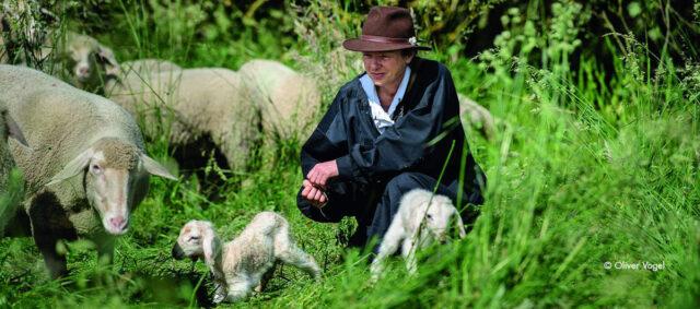 Eine Hirtin mit Schafen im Gras