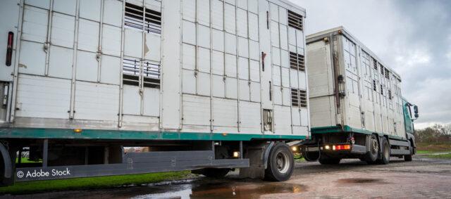Tiertransporter von außen