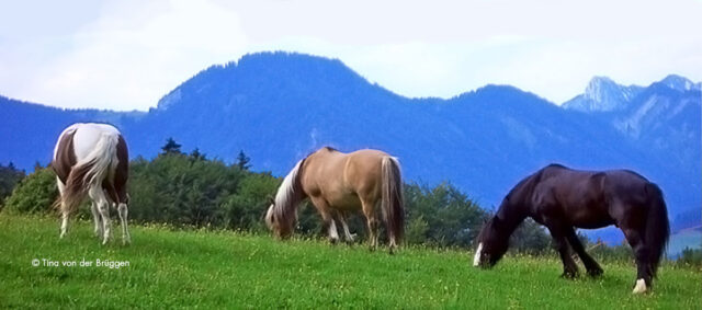 Pferde auf einer Wiese vor Bergen