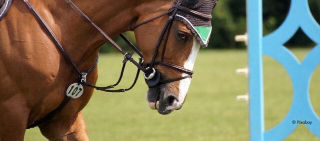 Ein Portrait eines Pferdes in der Dressur